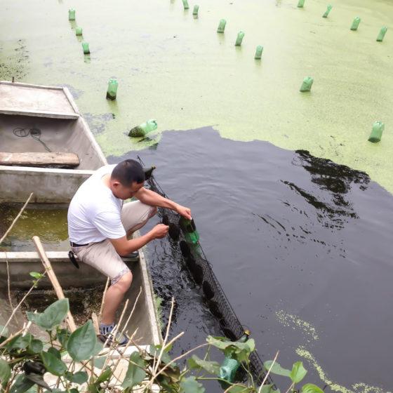 coltura perle di fiume